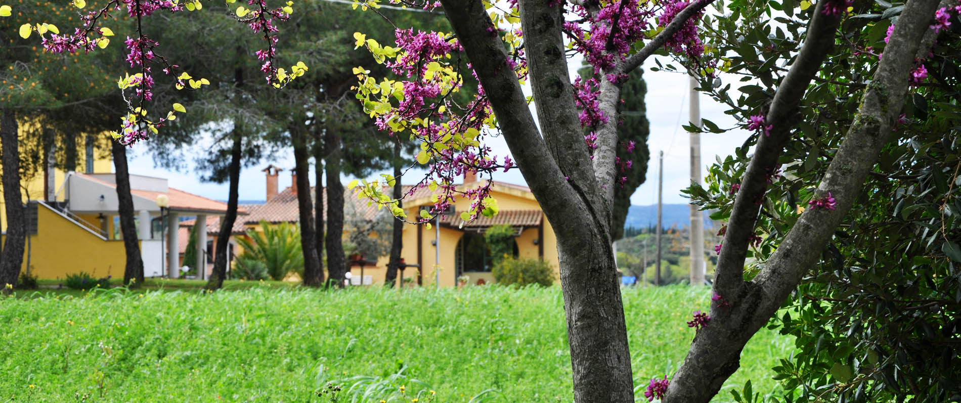 Farmhouse Tuscan countryside near Bolgheri and the sea